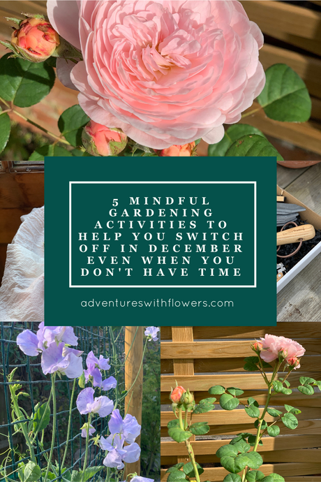 5 mindful gardening activities to help you switch off in December even when you don't have time