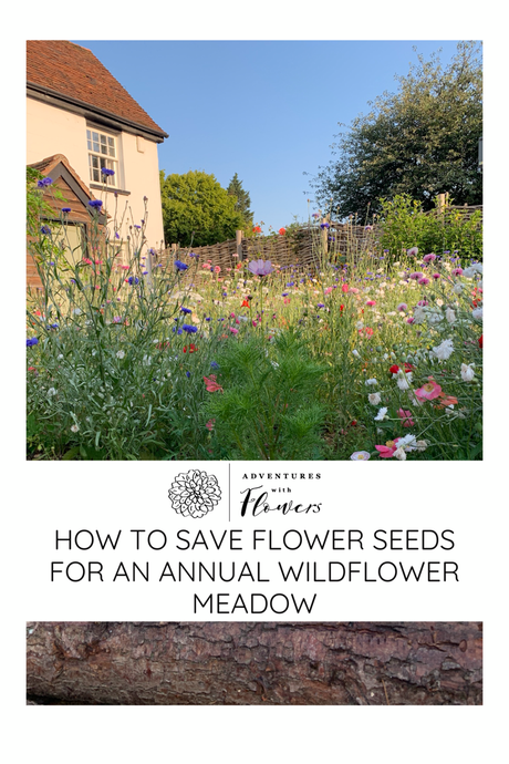 How to save flower seeds for an annual wildflower meadow