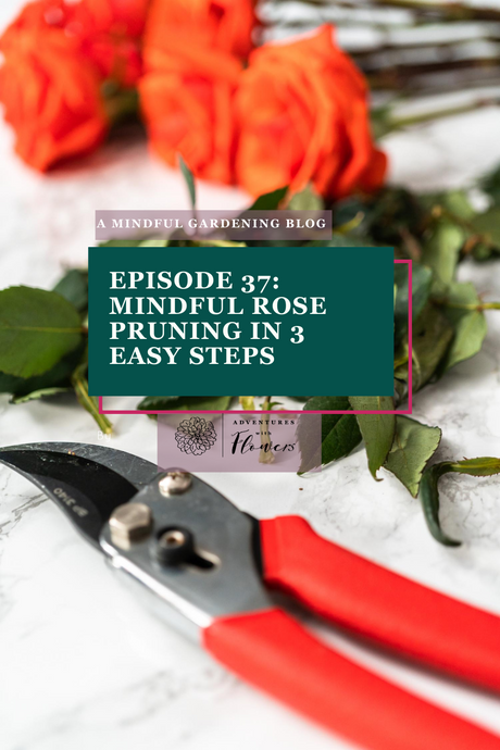 Episode 37: Mindful rose pruning in 3 easy steps