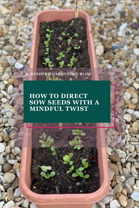 How to direct sow seeds with a mindful twist