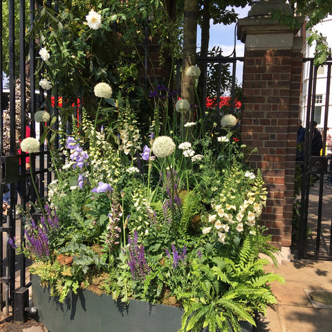 White alliums and foxgloves spilling out of a planter at the entrance to Chelsea flower show