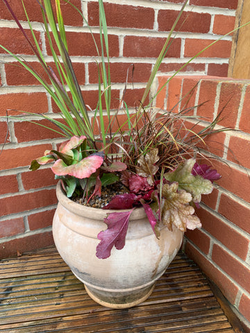 bright pink, red, orange and bright green plants in a cream pot topped with gravel
