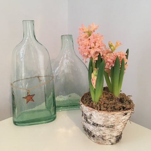 Two glass bottles or vases and a bark covered flower pot containing 3 gypsy queen hyacinth bulbs, one in full flower with coral pink flowers and green leaves, one with the flowers just opening up and the third bulb is just starting to turn coral pink.