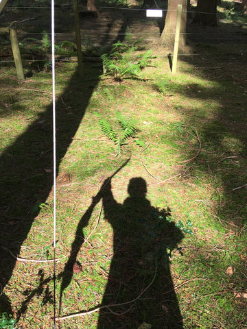 shadow of a woman holding a bow in the middle of a wooded area