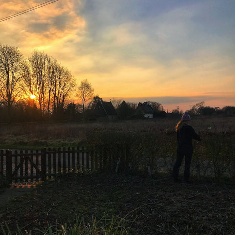 Winter gardening at sunset with field views