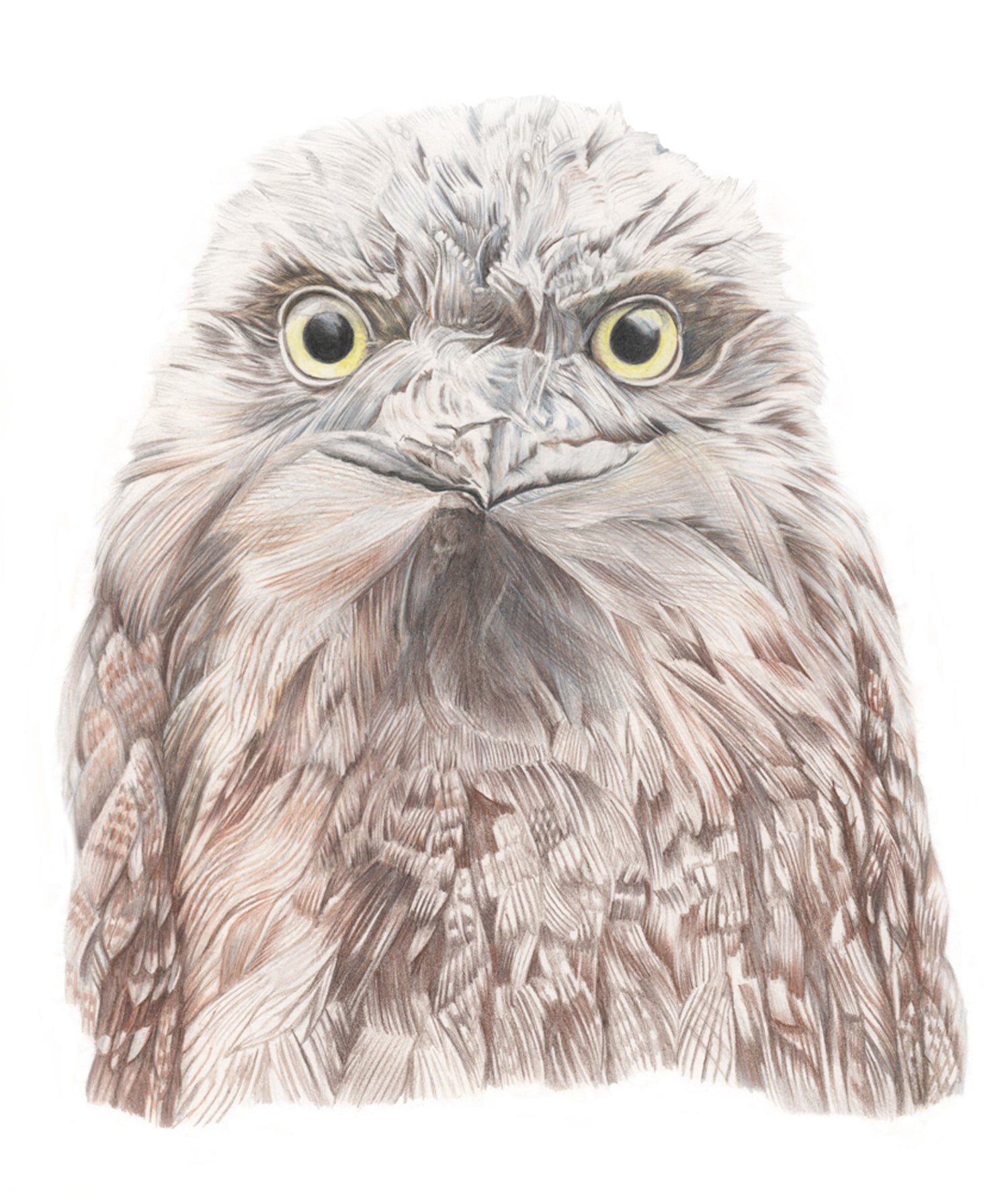 Tawny Frog Mouth print by Alison Dickin