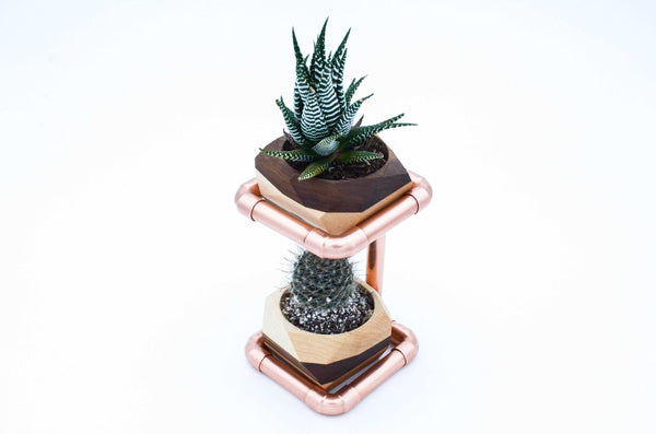 Geometric Double Cactus & Succulent Planter with - shopcontrabrands.com