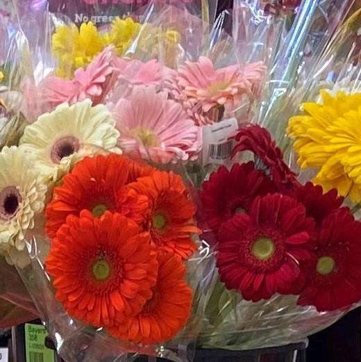 Farmer's Market Gerbera Bunch