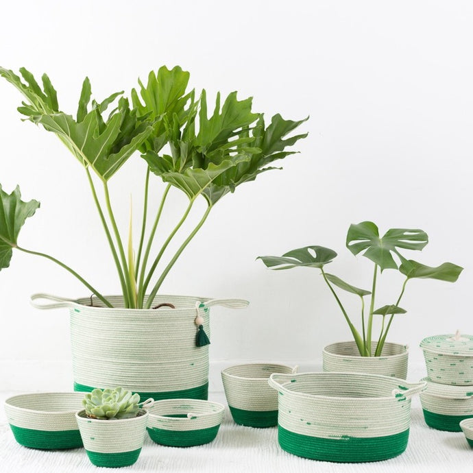 Greenery Collection
