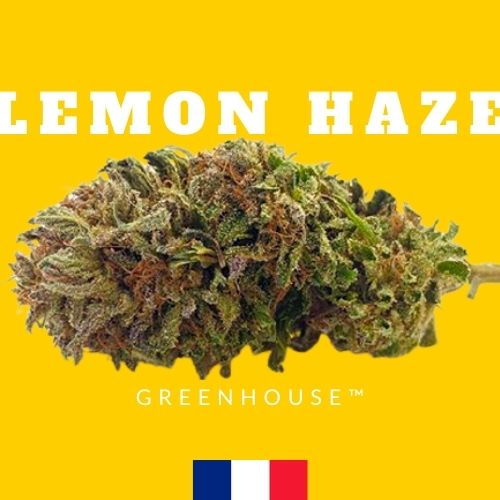 fleur chanvre cbd france lemon haze
