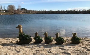 Ivy Topiary Duck