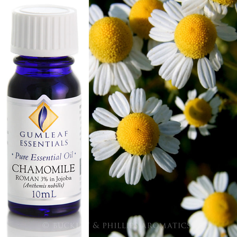 Chamomile Roman (3% In Jojoba) Essential Oil
