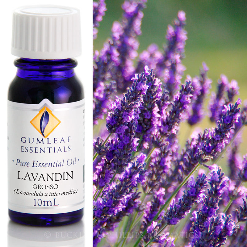 Lavandin Grosso Essential Oil