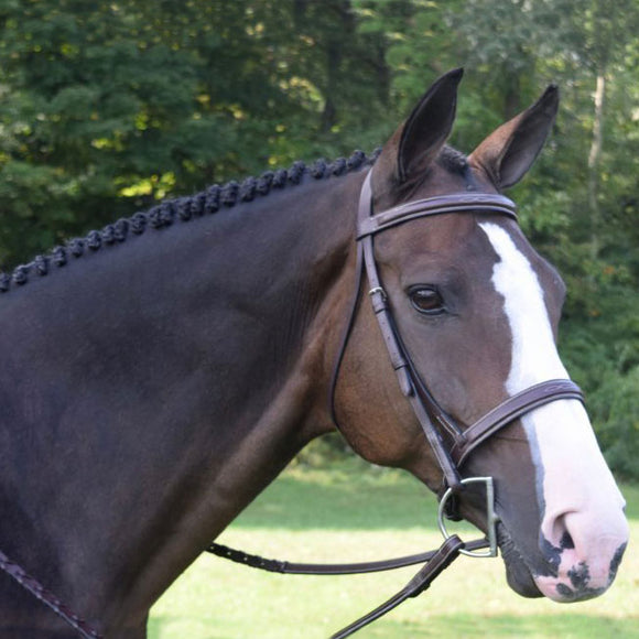 Black Oak Spruce Square Raised Hunter Bridle