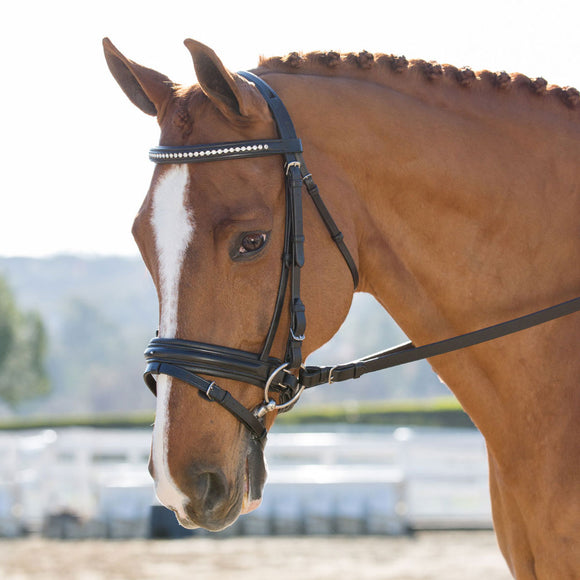 Black Oak Larkspur Dressage Bridle
