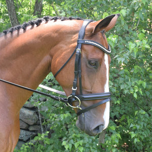 Black Oak Magnolia Dressage Bridle