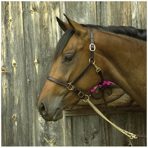 "Perri's Premium 3/4"" Leather Show Halter"
