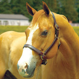 "Perri's 1"" Leather Turnout Halter,  Draft Size"