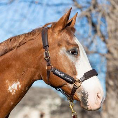 ThinLine Better Than Fleece Halter Cover Kit