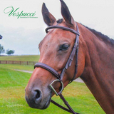 Vespucci Veritas Fancy Raised Hunter Bridle with Reins