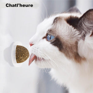 Cataire jouet chat