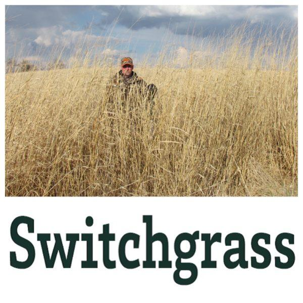 Switchgrass - A Man Standing in Tall Grass
