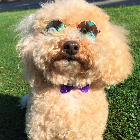 Sparkly Bow Tie Collar Purple and Mirrored Sunglasses Daisy
