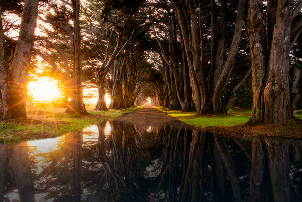 Cypress Tree Tunnel Reflection Photograph