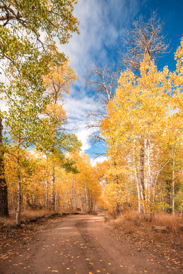 Eastern Sierra's golden fall colors