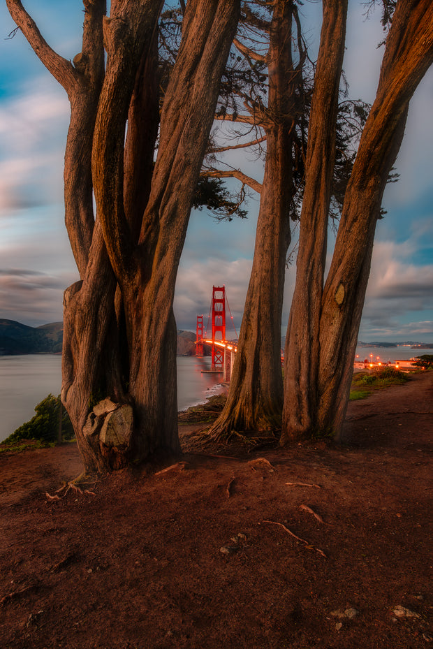 The famous Golden gate Bridge Overlook through the trees