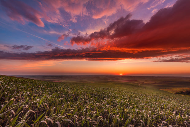 Palouse rolling hills sunset