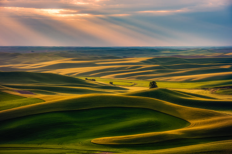 The Palouse rays of light