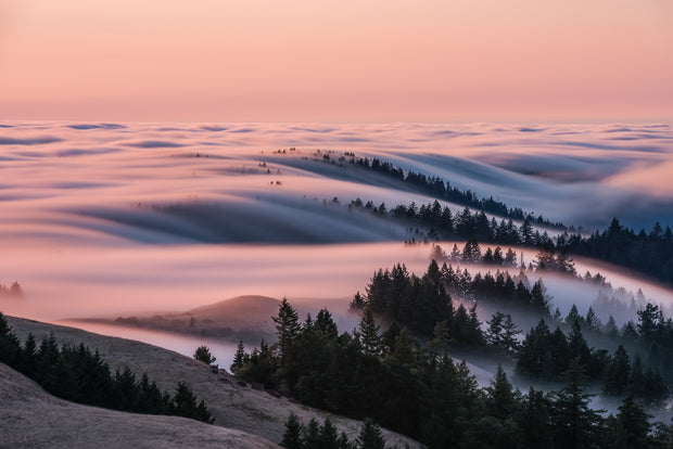 Mt Tam West ridge crest cotton candy Fog