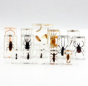 Resin | Insects | Set of 30