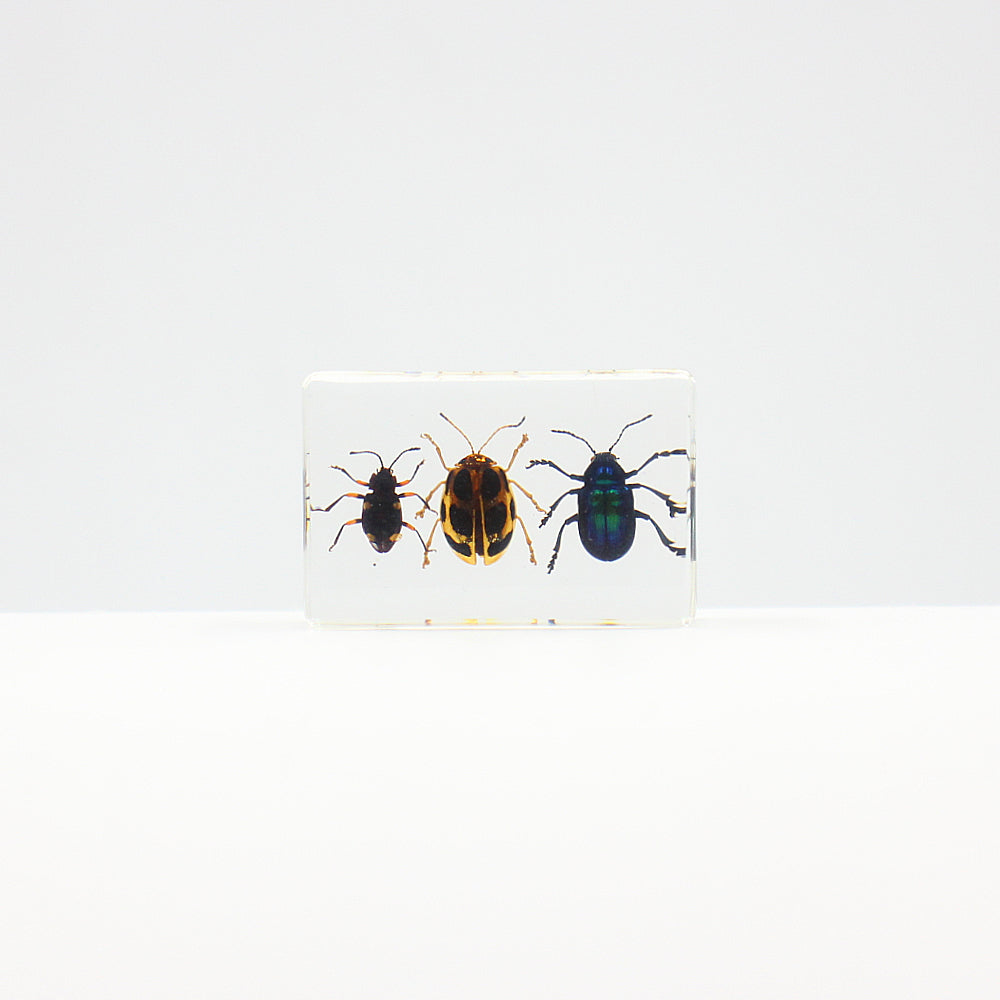 Resin | 3 Kinds of Leaf Beetles
