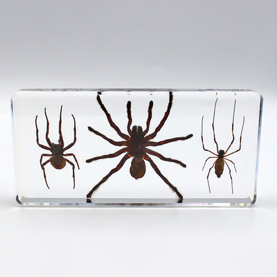 Resin | 3 Spider Set