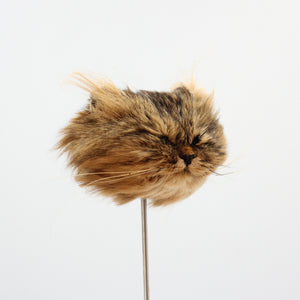 Shrunken Head | Cat | Light Tabby
