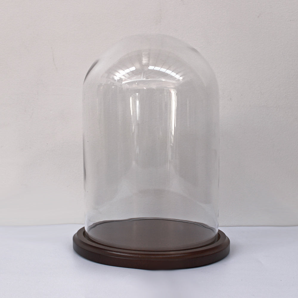 Glass Domes | Walnut Colour Base | Medium Size