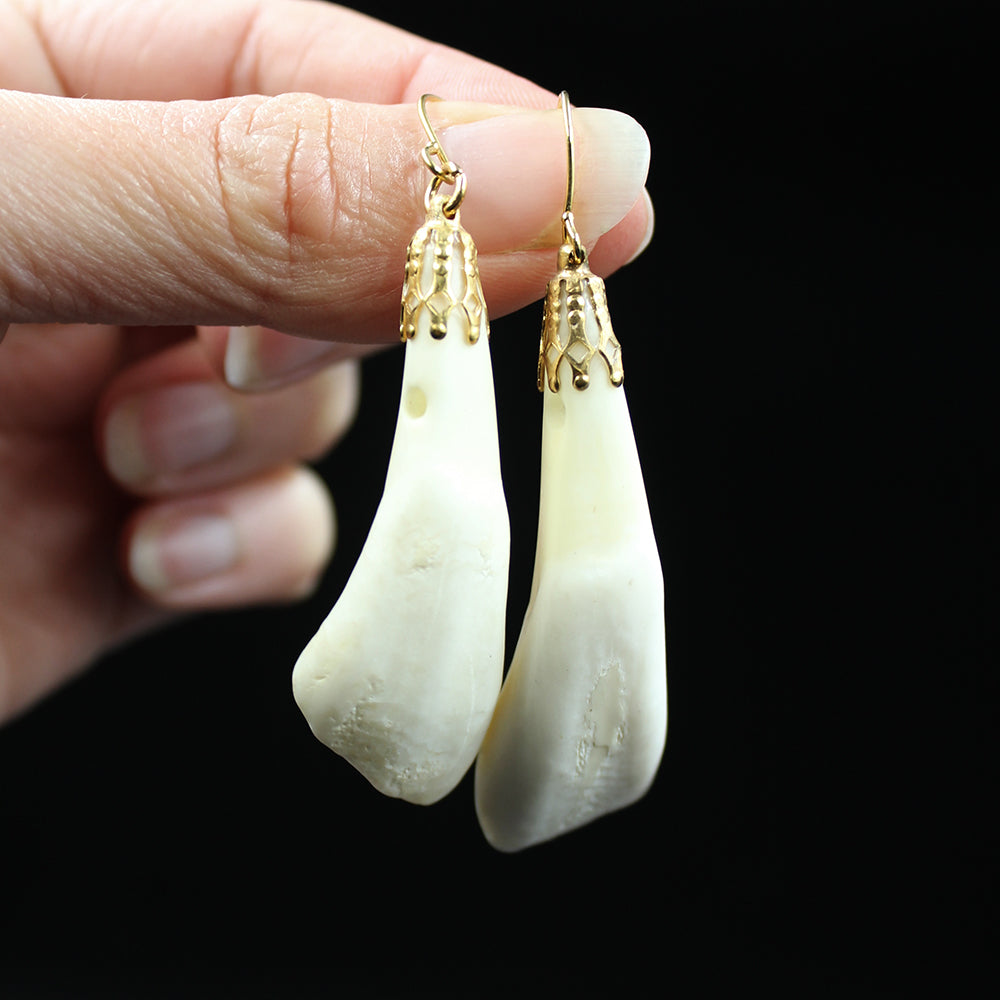 Earrings | Bison Teeth | Gold