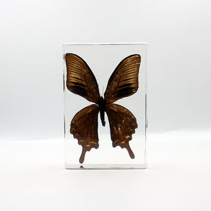 Resin | Butterfly | Papilio bianor Cramer