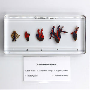 Resin | Comparative Hearts