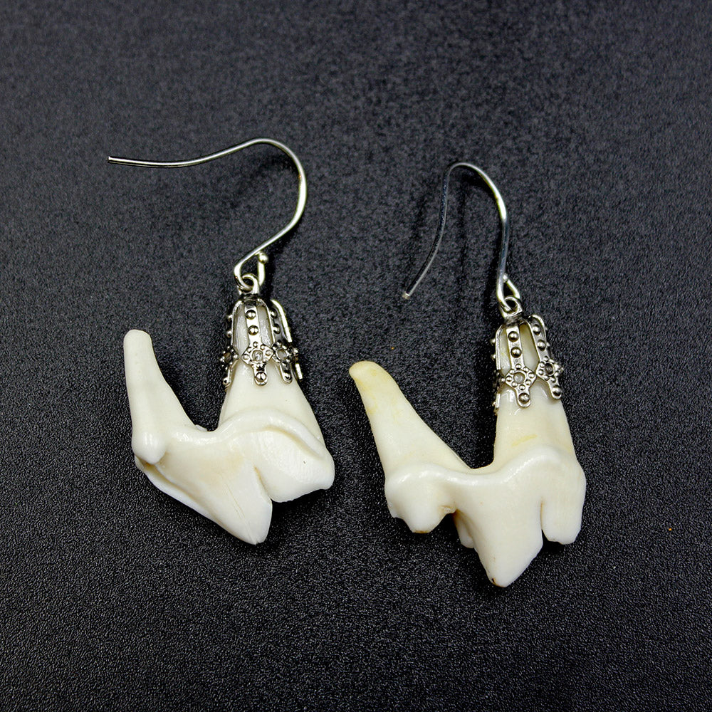 Earrings | Coyote Molars | Silver
