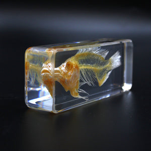 Resin | Fish | Skeleton 3