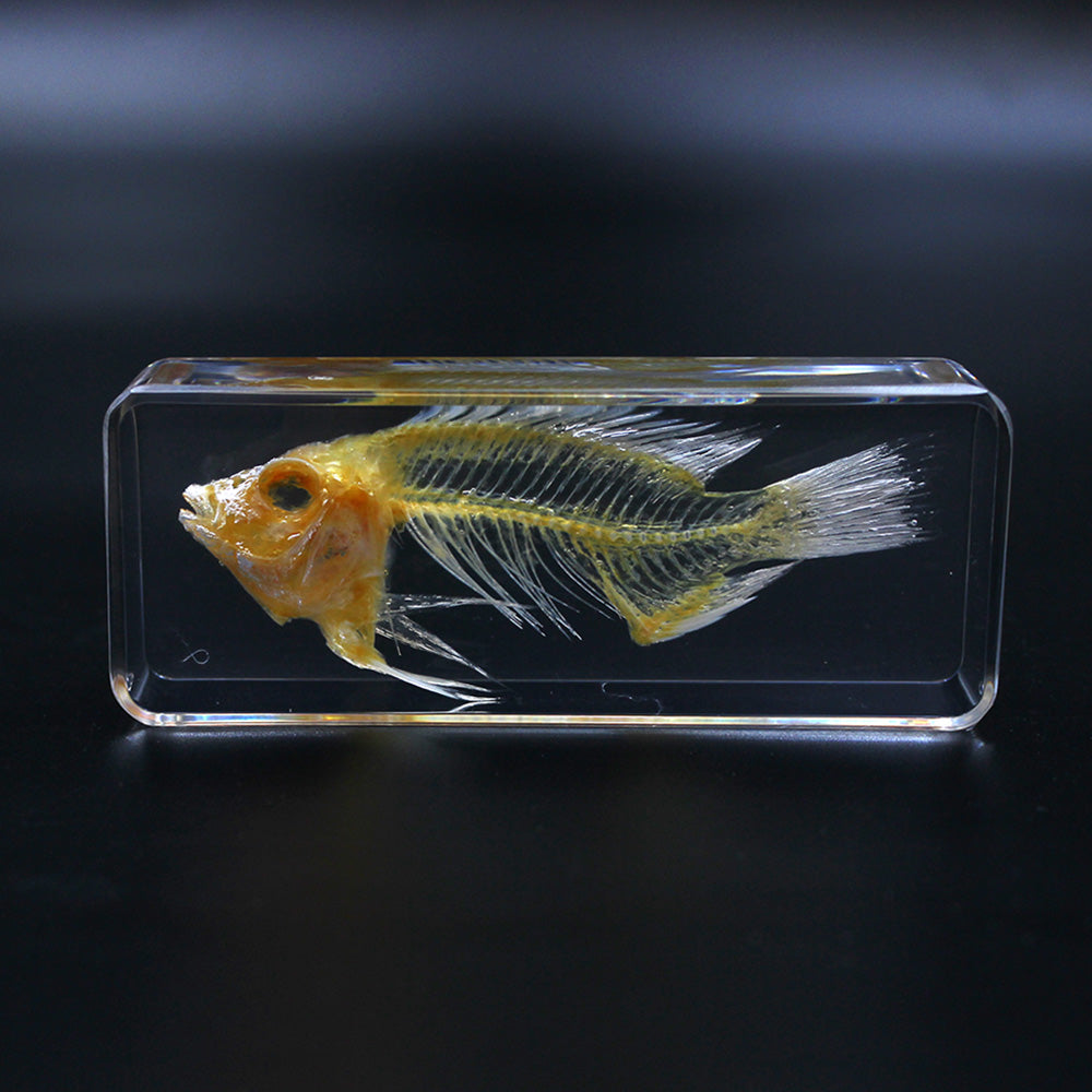 Resin | Fish Skeleton | Small