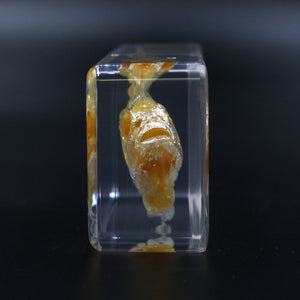 Resin | Fish | Skeleton
