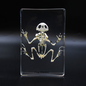 Resin | Frog | Skeleton