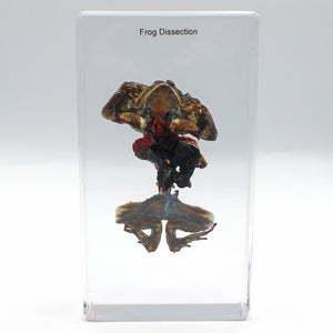 Resin | Frog Dissection