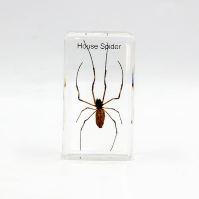 Resin | House Spider