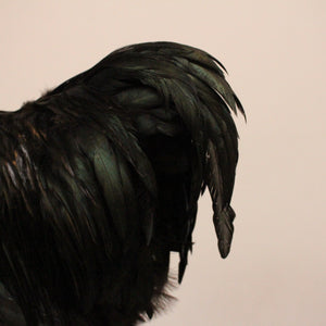 Taxidermy | Rooster | Rose Comb Bantam