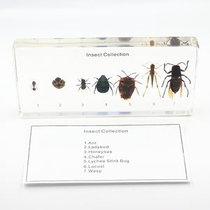 Resin | Insect Collection